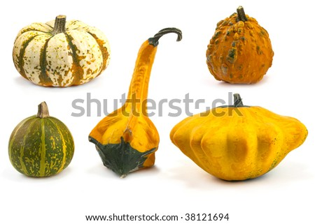 Photo of autumn gourds and pumpkins varied selection - stock photo