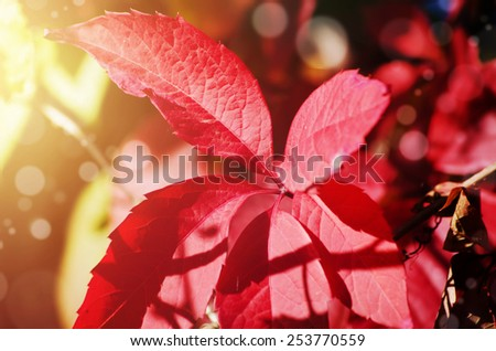 Photo of Autumn Leaves in Sunny Day - stock photo