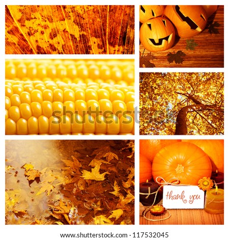 Photo of autumn season collage, autumnal dry foliage, sweet corn, thanksgiving day, pumpkin decoration, harvest season, fall forest, old orange leaves in water puddle, set of autumnal picture - stock photo