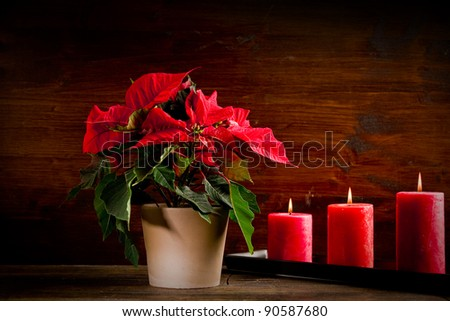 photo of beautiful poinsettia plan on wooden table illuminated by spot