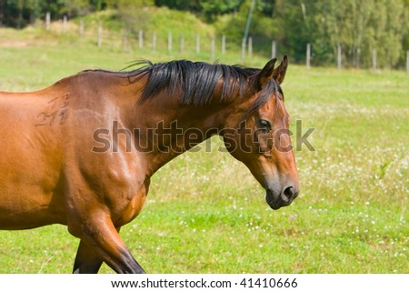 Photo of beauty horse on the green grass - stock photo