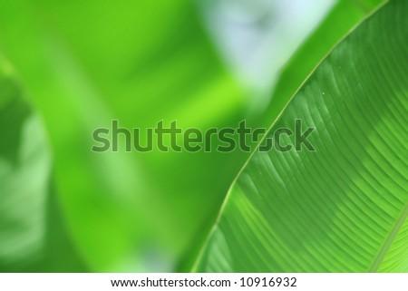Photo of big green leaf - stock photo