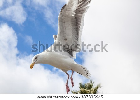 photo of big seagull in sky with clouds