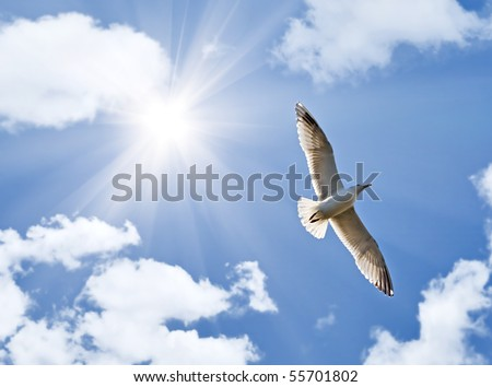 photo of big seagull in sky with clouds and bright sun - stock photo