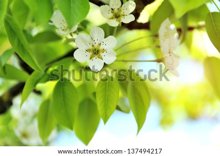 Photo of blossoming tree brunch with white flowers