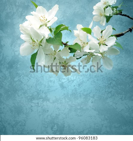 photo of blossoming tree brunch with white flowers on grange dark blue background - stock photo