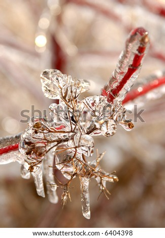 Photo of branches covered in ice after an ice storm. - stock photo
