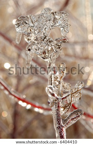 Photo of branches covered in ice after an ice storm - stock photo