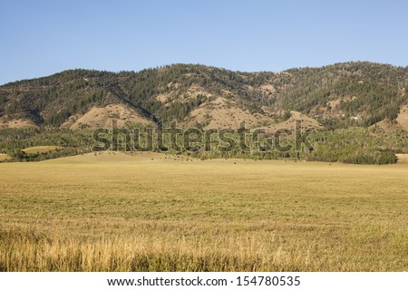 Photo of cattle and horses at a mountainside ranch taken in east Idaho. - stock photo
