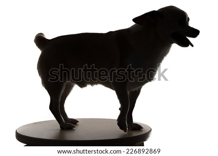 Photo of chihuahua's silhouette on white background - stock photo