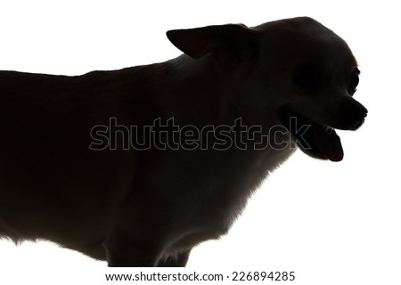 Photo of chihuahua with open mouth - silhouette on white background - stock photo