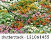 photo of colorful flowers garden - stock photo