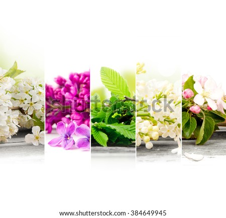Photo of colorful spring bloom mix slices with white space