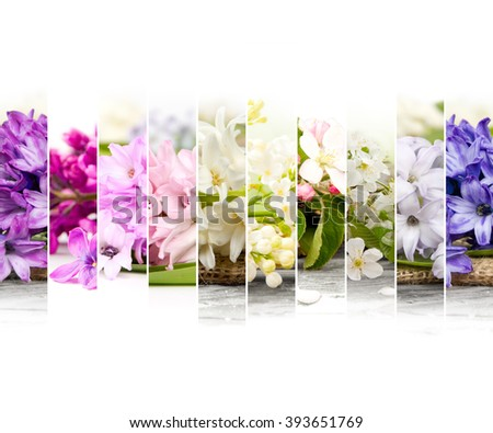Photo of colorful spring bloom mix slices with white space - stock photo