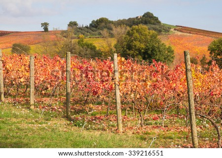Photo of colorful vineyard in the umbria region, Italy.