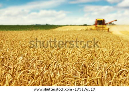 Photo of combine harvester that is harvesting wheat with dust straw in the air. - stock photo
