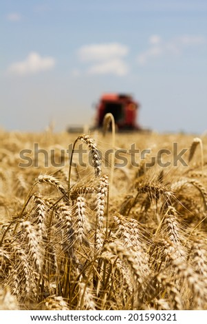 Photo of combine harvesting wheat with selective focus. - stock photo