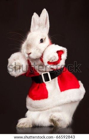 Photo of cute rabbit in a santa costume. Isolated on dark background - stock photo