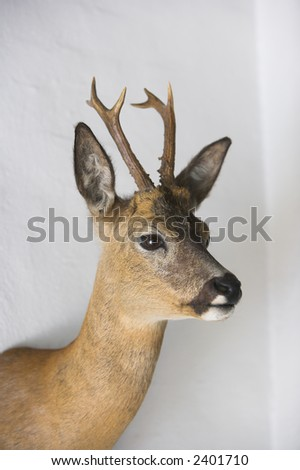 Photo of dear on a hunters wall (not isolation, real wall) - stock photo