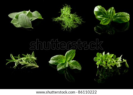 photo of different fresh herbs putted together into a collage - stock photo