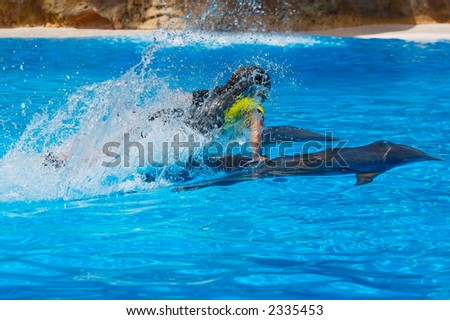 photo of dolphins doing a show in the swimming pool - stock photo