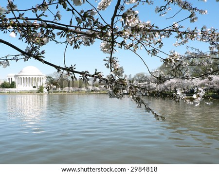 photo of early blooming Cherry Blossoms in Washington, DC during the beginning of Spring with Jefferson Memorial in the background - stock photo