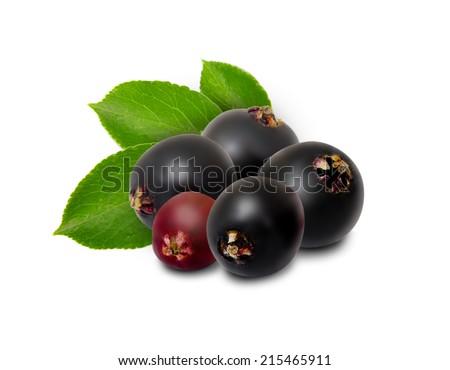 Photo of elderberries isolated on white - stock photo