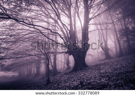 Photo of enchanted forest in the monte cucco mountain, umbria - Italy.