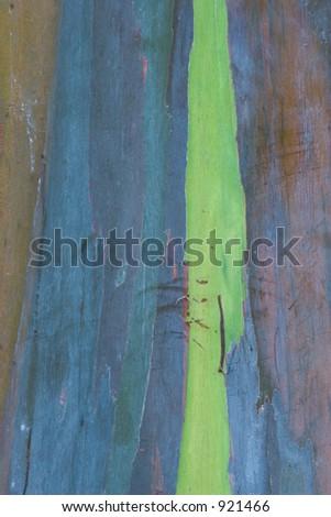 Photo of Eucalyptus bark t the Waimea Valley Audubon Center on Oahu, Hawaii - stock photo