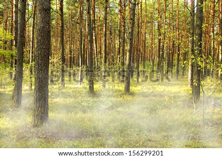 photo of forest and fog  - stock photo