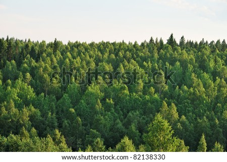 Photo of forest on sunset - stock photo