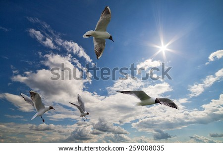 photo of four gulls in sky with clouds and bright sun - stock photo