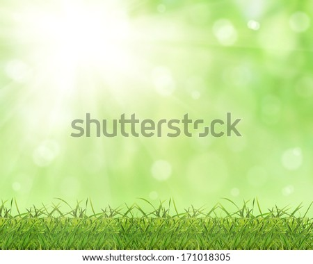 photo of grass on bright green background