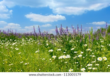 Photo of green grass, green meadow. - stock photo