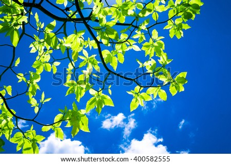 Photo of green leaves against clouds and blue sky background. - stock photo