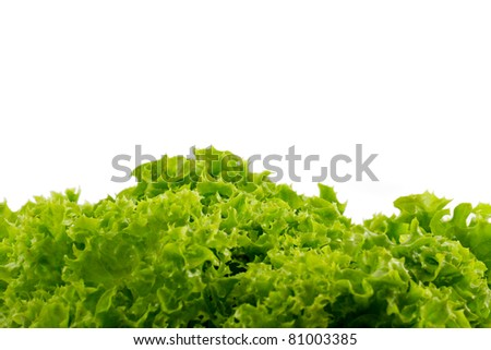 Photo of green lettuce with white background