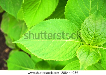 Photo of Green Plant Background.
