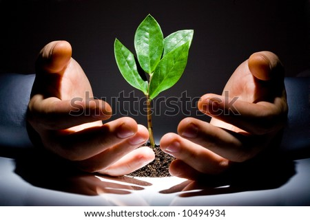 Photo of green plant between male hands on a black background - stock photo