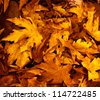 Photo of grunge leaves background, abstract autumnal backdrop, orange october foliage, beauty plant, dark golden woods nature, colorful maple leaves, fall season, floral wallpaper - stock photo
