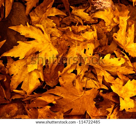 Photo of grunge leaves background, abstract autumnal backdrop, orange october foliage, beauty plant, dark golden woods nature, colorful maple leaves, fall season, floral wallpaper