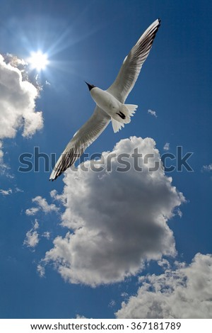 photo of gull in sky with clouds and bright sun - stock photo