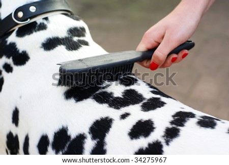 Photo of hand brushing a dalmatian dog.