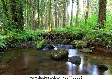 Photo of landscape in forest, a succession of rocks in a brook which seems to indicate us the path(way) not to get lost / The forest of the Tom Thumb - stock photo