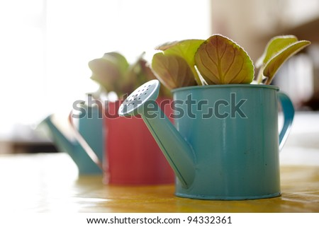 Photo of nice pots plant - stock photo