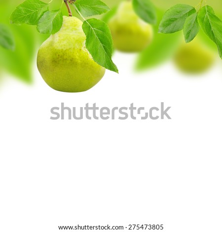 Photo of pears with leaves and white space for text - stock photo