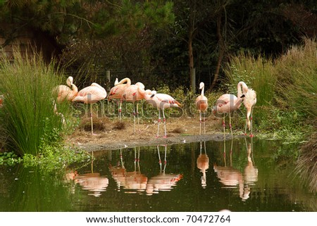 Photo of pink flamingos in the zoo - stock photo