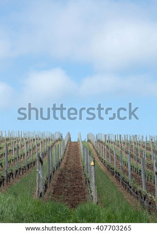Photo of Pinot Vineyards in Oregon's Willamette Valley - stock photo