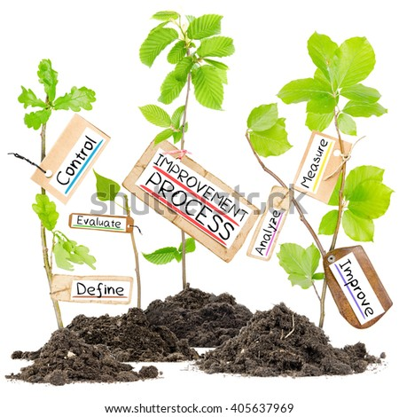 Photo of plants growing from soil heaps with IMPROVEMENT PROCESS conceptual words written on paper cards - stock photo