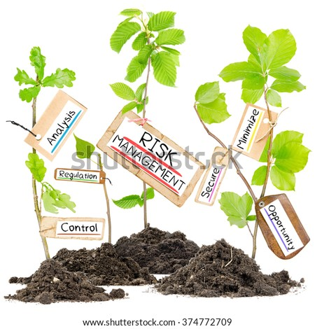 Photo of plants growing from soil heaps with RISK MANAGEMENT conceptual words written on paper cards - stock photo