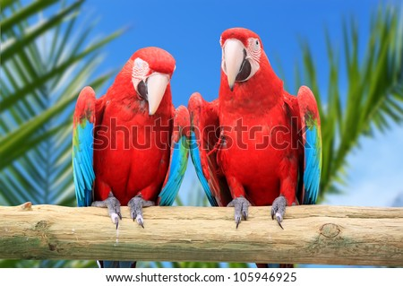 Photo of 2 red parrots Macaw - stock photo